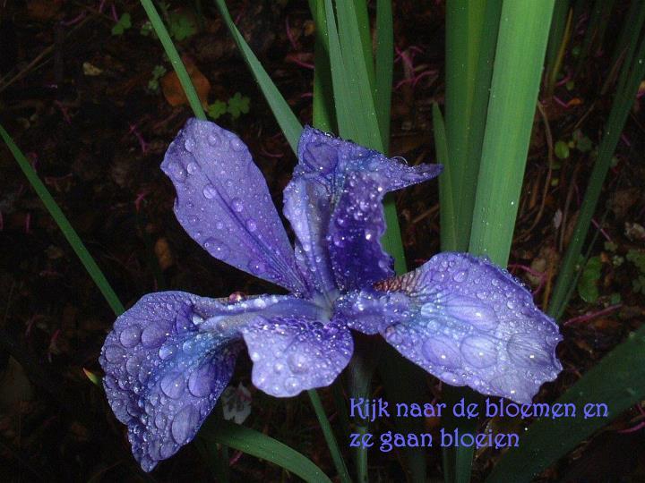 Kijk naar de bloemen en ze gaan bloeien