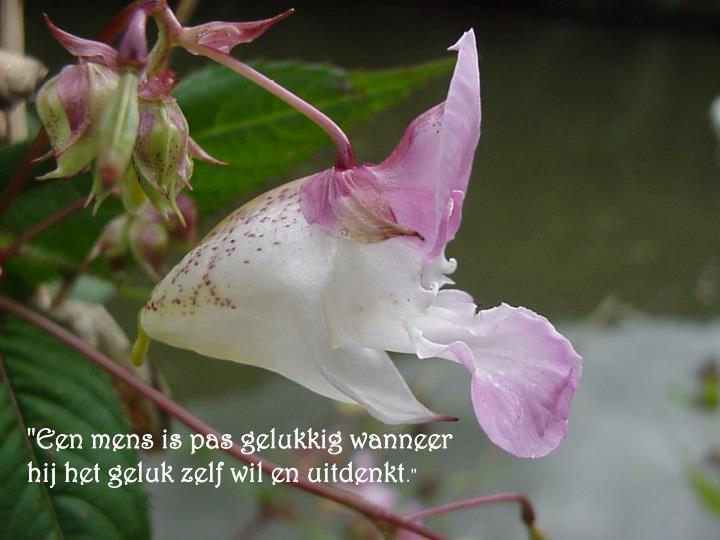 """""""Een mens is pas gelukkig wanneer hij het geluk zelf wil en uitdenkt"""