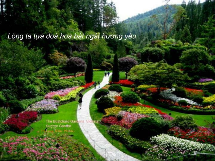 Lòng ta tựa đoá hoa bát ngát hương yêu