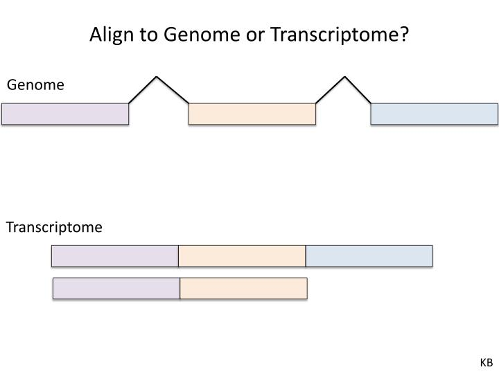 Align to Genome or