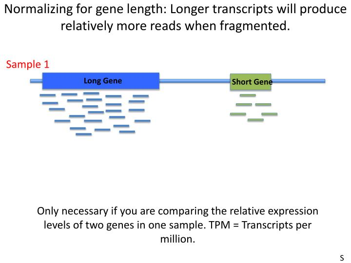 Normalizing for gene length: Longer transcripts will produce relatively more reads when fragmented.