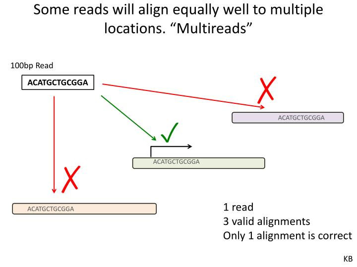 """Some reads will align equally well to multiple locations. """""""