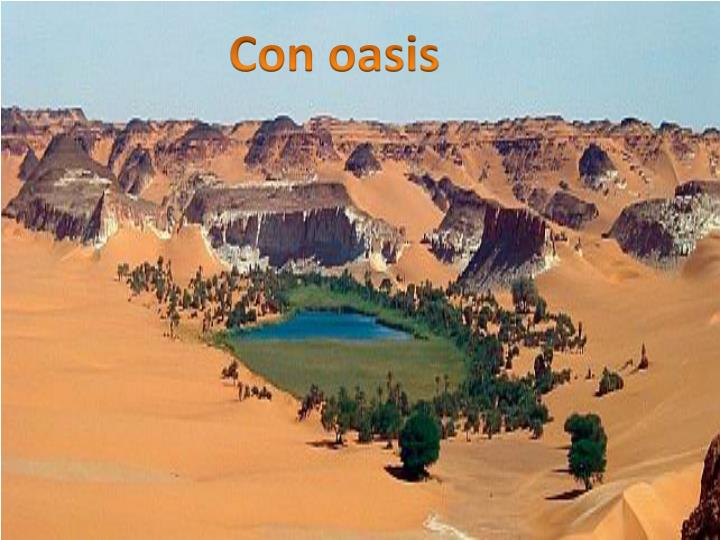 Con oasis