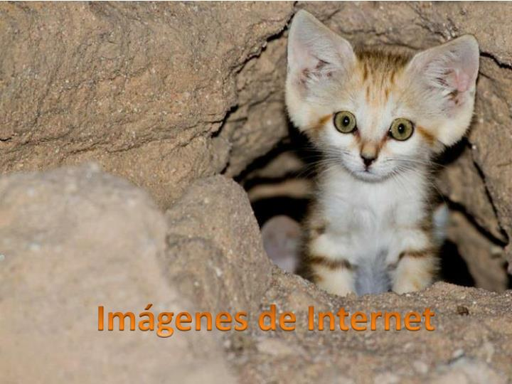 Imágenes de Internet