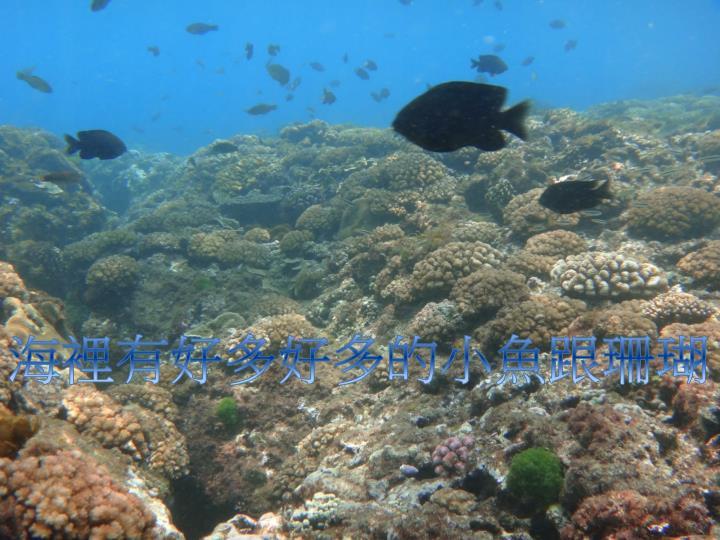 海裡有好多好多的小魚跟珊瑚