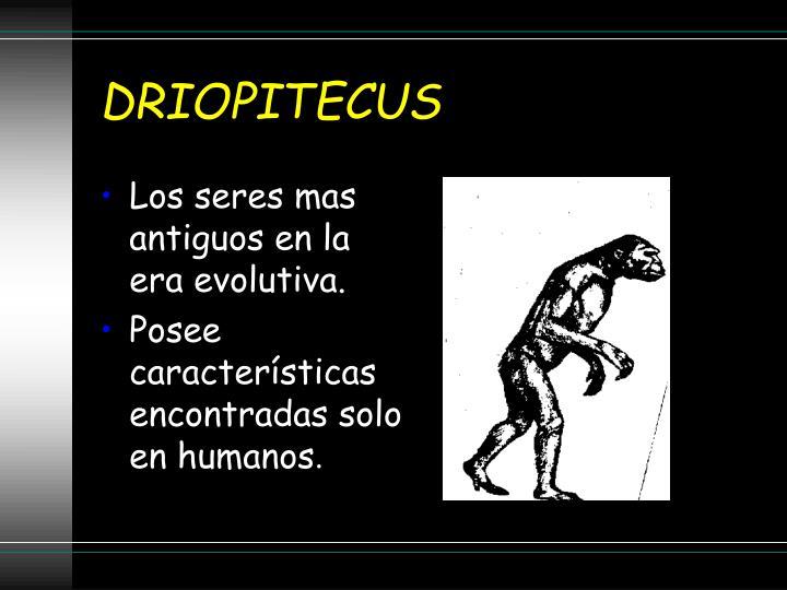 DRIOPITECUS