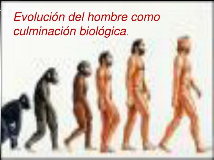 Evolución del hombre como culminación biológica