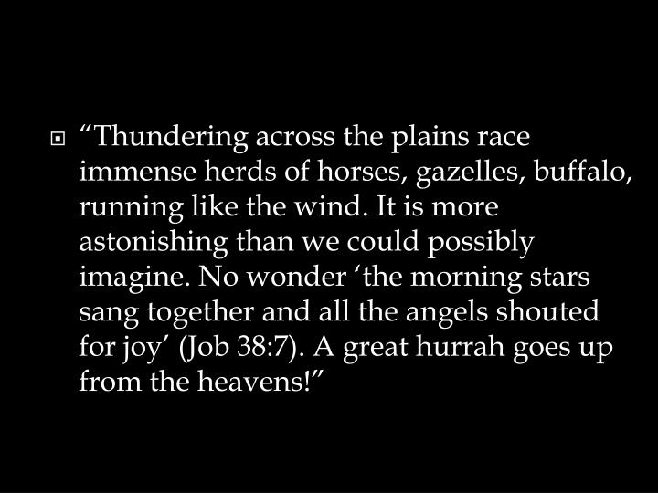 """Thundering across the plains race immense herds of horses, gazelles, buffalo, running like the wind. It is more astonishing than we could possibly imagine. No wonder 'the morning stars sang together and all the angels shouted for joy' (Job 38:7). A great hurrah goes up from the heavens!"""