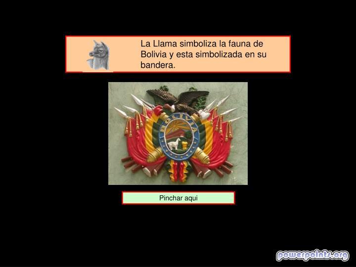 La Llama simboliza la fauna de Bolivia y esta simbolizada en su bandera.