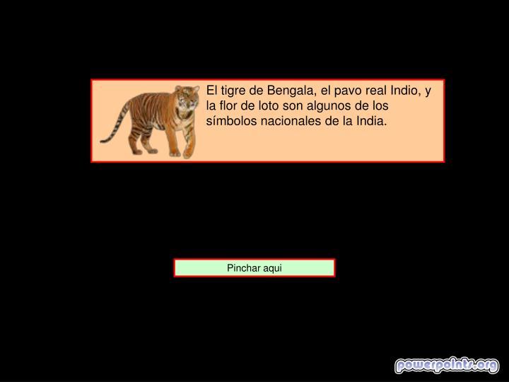 El tigre de Bengala, el pavo real Indio, y