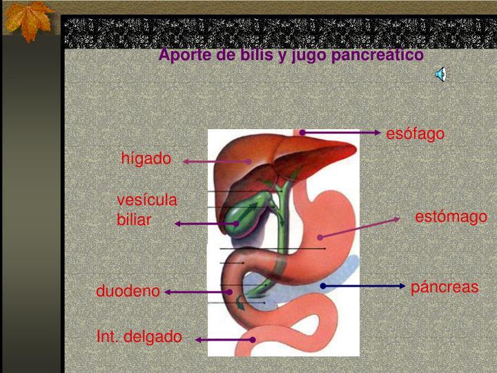 Aporte de bilis y jugo pancreático