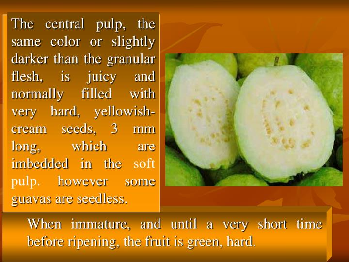 The central pulp, the same color or slightly darker than the granular flesh, is juicy and normally filled with very hard, yellowish-cream seeds, 3 mm long, which are imbedded in the