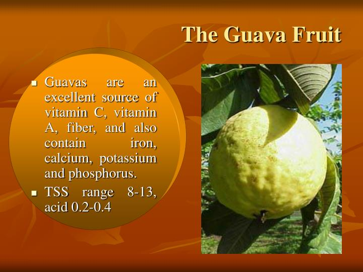 The Guava Fruit