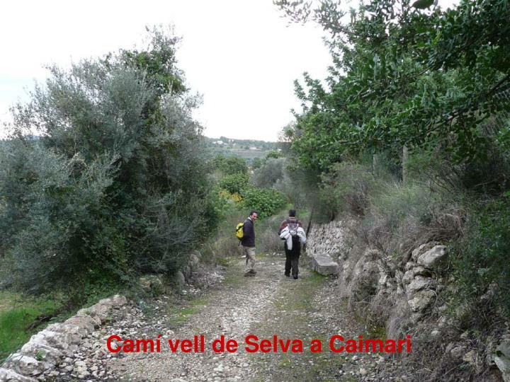 Camí vell de Selva a Caimari