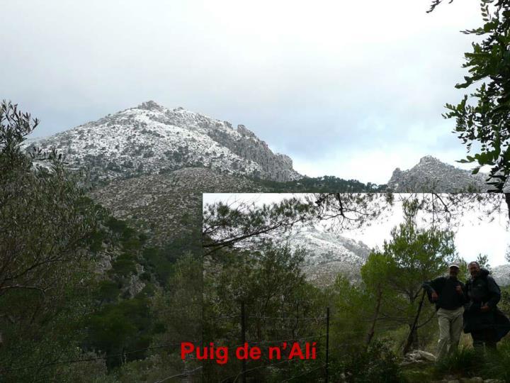 Puig de n'Alí