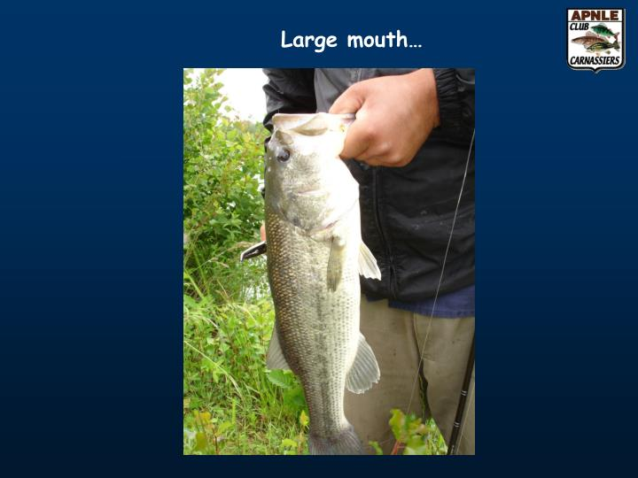 Large mouth…
