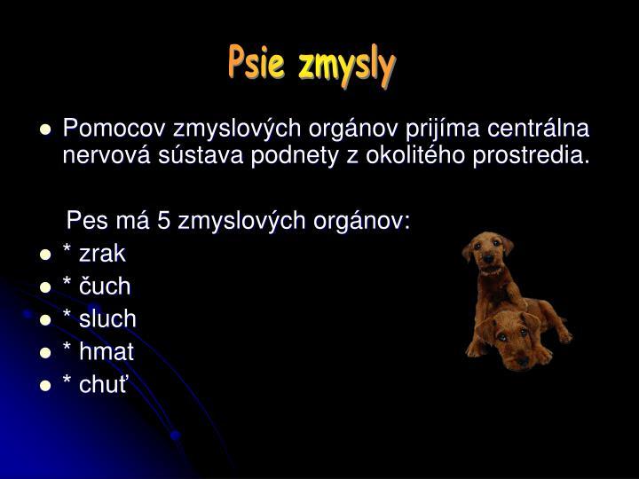 Psie zmysly