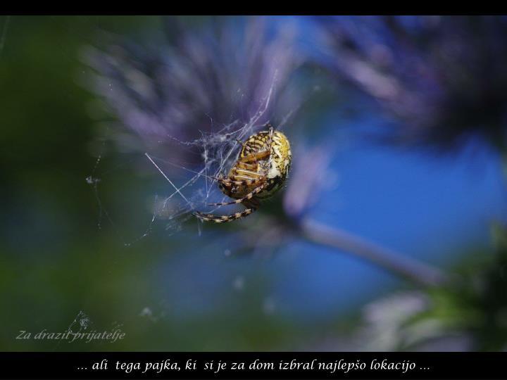 … ali  tega pajka, ki  si je za dom izbral najlepšo lokacijo …
