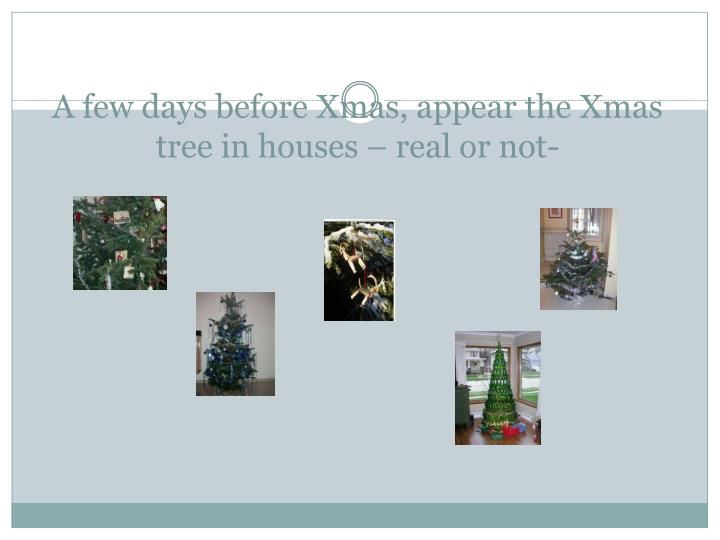 A few days before Xmas, appear the Xmas tree in houses – real or not-