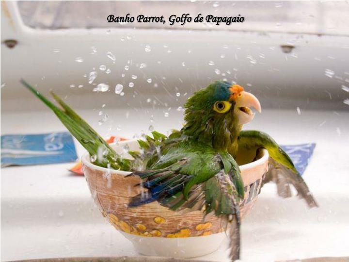 Banho Parrot, Golfo de Papagaio