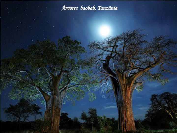 Árvores  baobab, Tanzânia