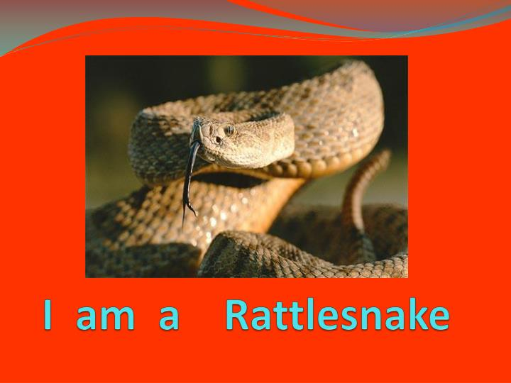 I  am  a    Rattlesnake