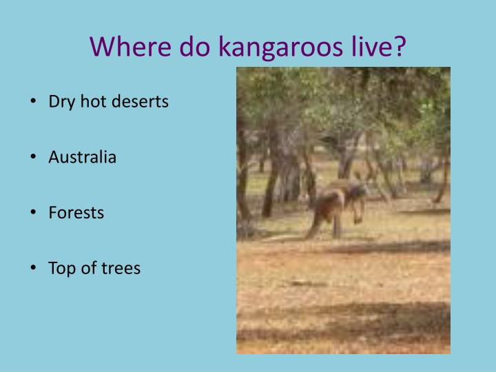 Where do kangaroos live