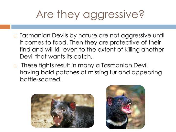 Are they aggressive?