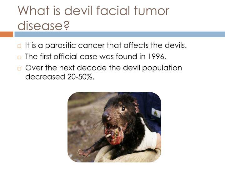 What is devil facial tumor disease?