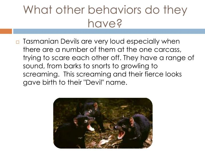 What other behaviors do they have?