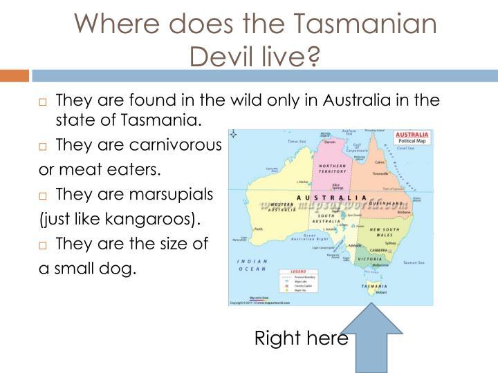 Where does the Tasmanian Devil live?