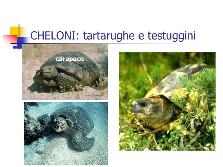 CHELONI: tartarughe e testuggini