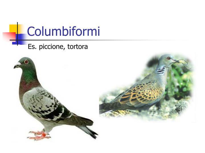 Columbiformi