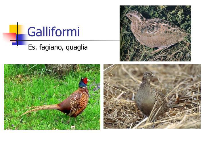 Galliformi