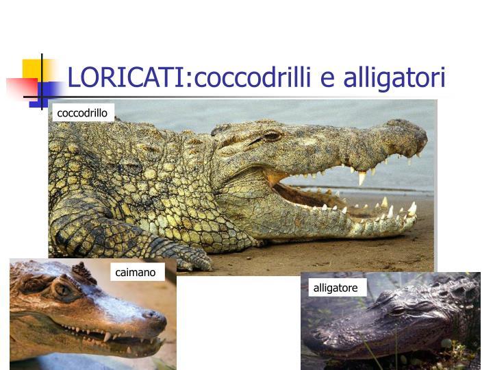 LORICATI:coccodrilli e alligatori