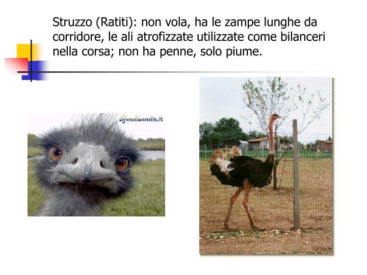 Struzzo (Ratiti): non vola, ha le zampe lunghe da corridore, le ali atrofizzate utilizzate come bilanceri nella corsa; non ha penne, solo piume.