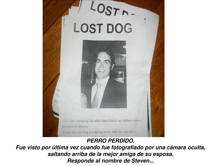 PERRO PERDIDO.