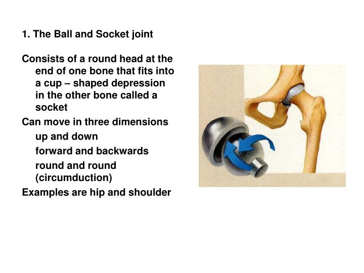 1. The Ball and Socket joint