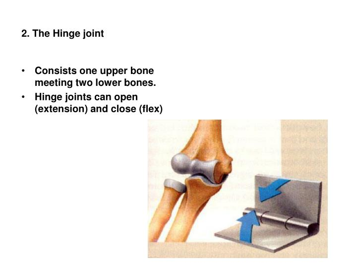 2. The Hinge joint