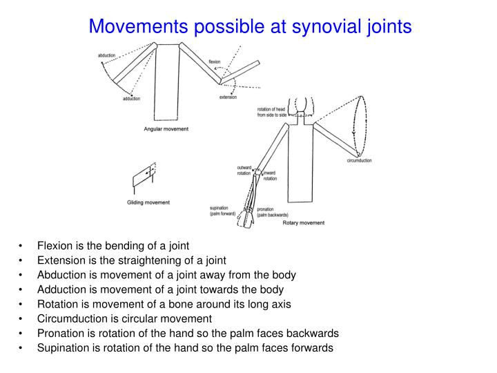 Movements possible at synovial joints