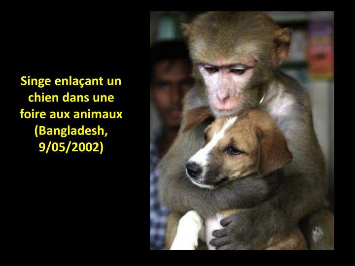 Singe enlaçant un chien dans une foire aux animaux (Bangladesh, 9/05/2002)