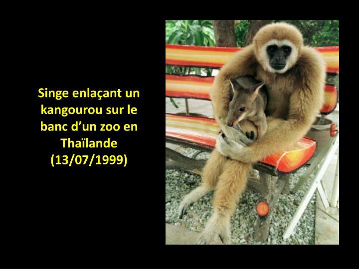 Singe enlaçant un kangourou sur le banc d'un zoo en Thaïlande (13/07/1999)