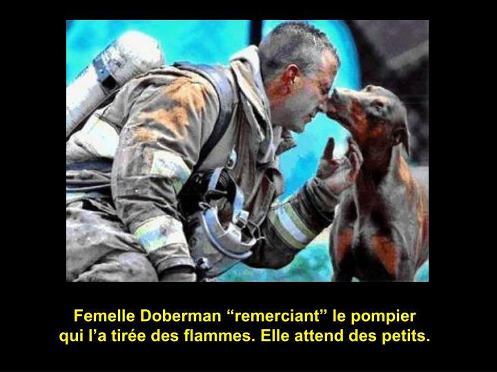 "Femelle Doberman ""remerciant"" le pompier"