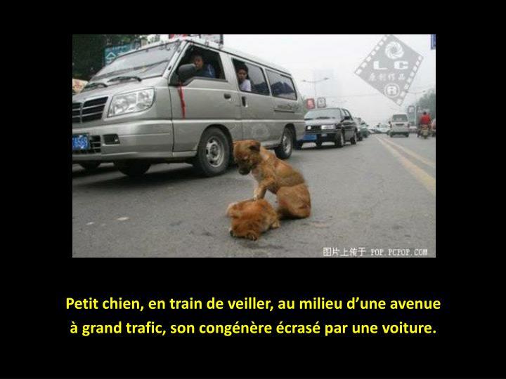 Petit chien, en train de veiller, au milieu d'une avenue