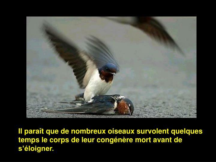 Il paraît que de nombreux oiseaux survolent quelques temps le corps de leur congénère mort avant de s'éloigner.