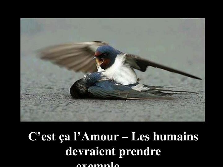 C'est ça l'Amour – Les humains devraient prendre exemple……..