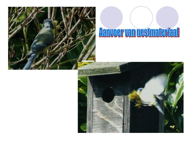 Aanvoer van nestmateriaal