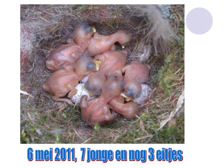 6 mei 2011,  7 jonge en nog 3 eitjes