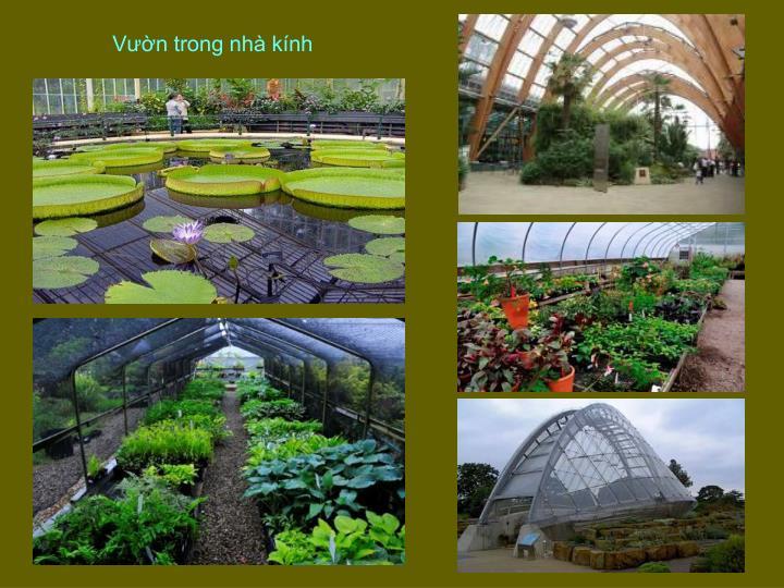 Vườn trong nhà kính