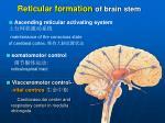 reticular formation of brain stem1